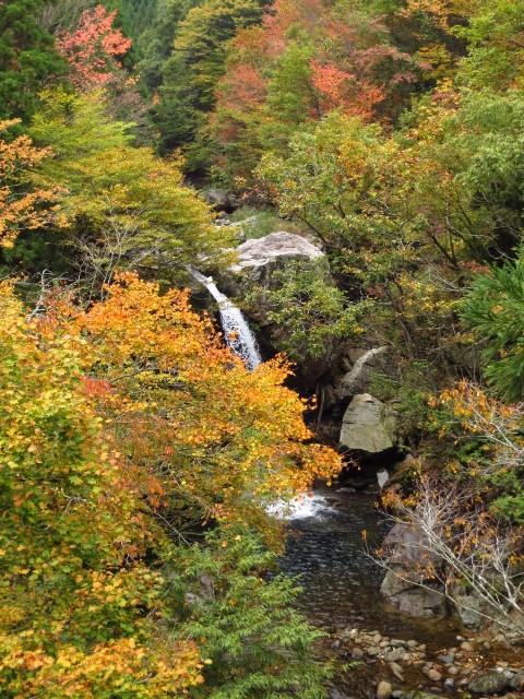 恐羅漢、大規模林道の紅葉