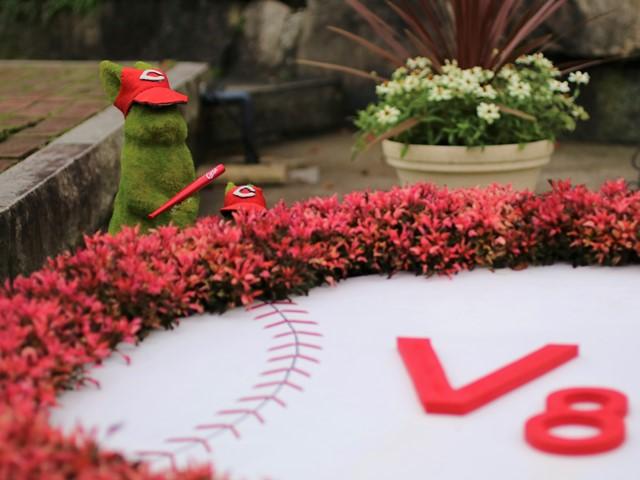 広島市植物公園、カープV8