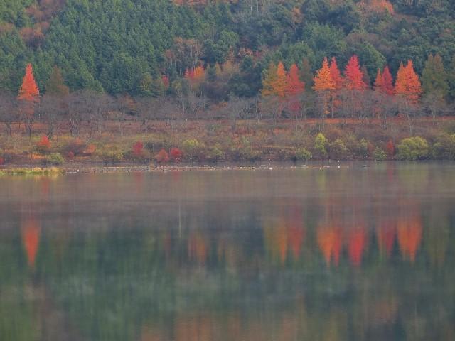 土師ダムの紅葉