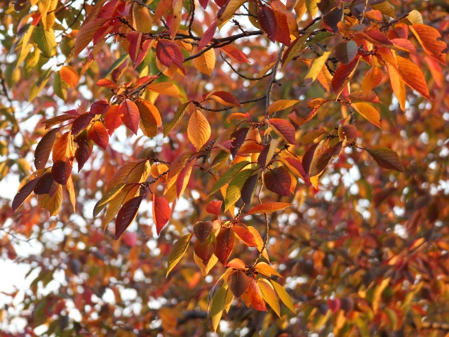 住吉堤防敷、秋の桜並木