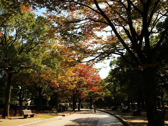 広島平和記念公園の紅葉