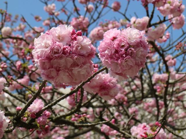造幣局広島支局の「花のまわりみち」